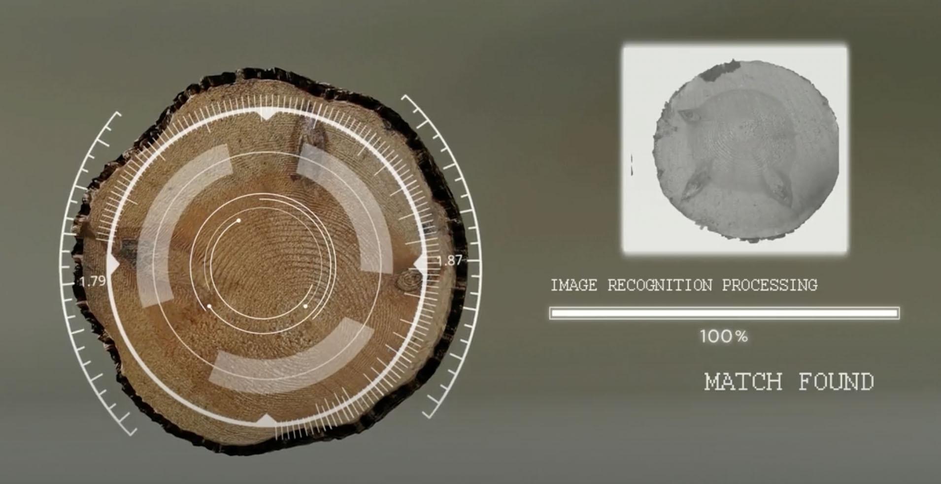 Taigatechs AI-lösning identifierar timmerstockar hela vägen genom sågverket.